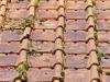 Traitement anti-mousse d'une toiture : pourquoi, quand, comment, tarif